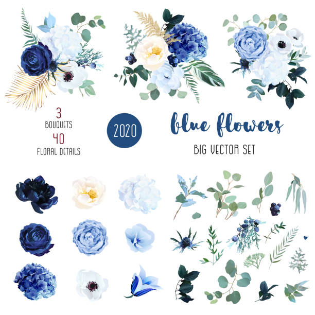 Classic blue, white rose, white hydrangea, ranunculus Classic blue, white rose, white hydrangea, ranunculus, campanula, anemone, peony, thistle flowers,greenery and eucalyptus,berry, juniper big vector set.Trendy color collection. Isolated and editable rose flower stock illustrations