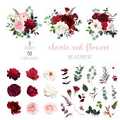Classic luxurious red and peachy roses, pink carnation, ranunculus, dahlia, white peony, berry, astilbe, eucalyptus big vector design set. Elegant wedding bunches of flowers. Isolated and editable.