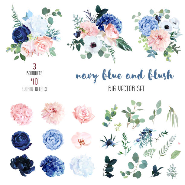 經典的海軍藍,白色,腮紅粉紅色玫瑰,繡球,蘭庫魯斯,蘭花 - 淺粉色 幅插畫檔、美工圖案、卡通及圖標