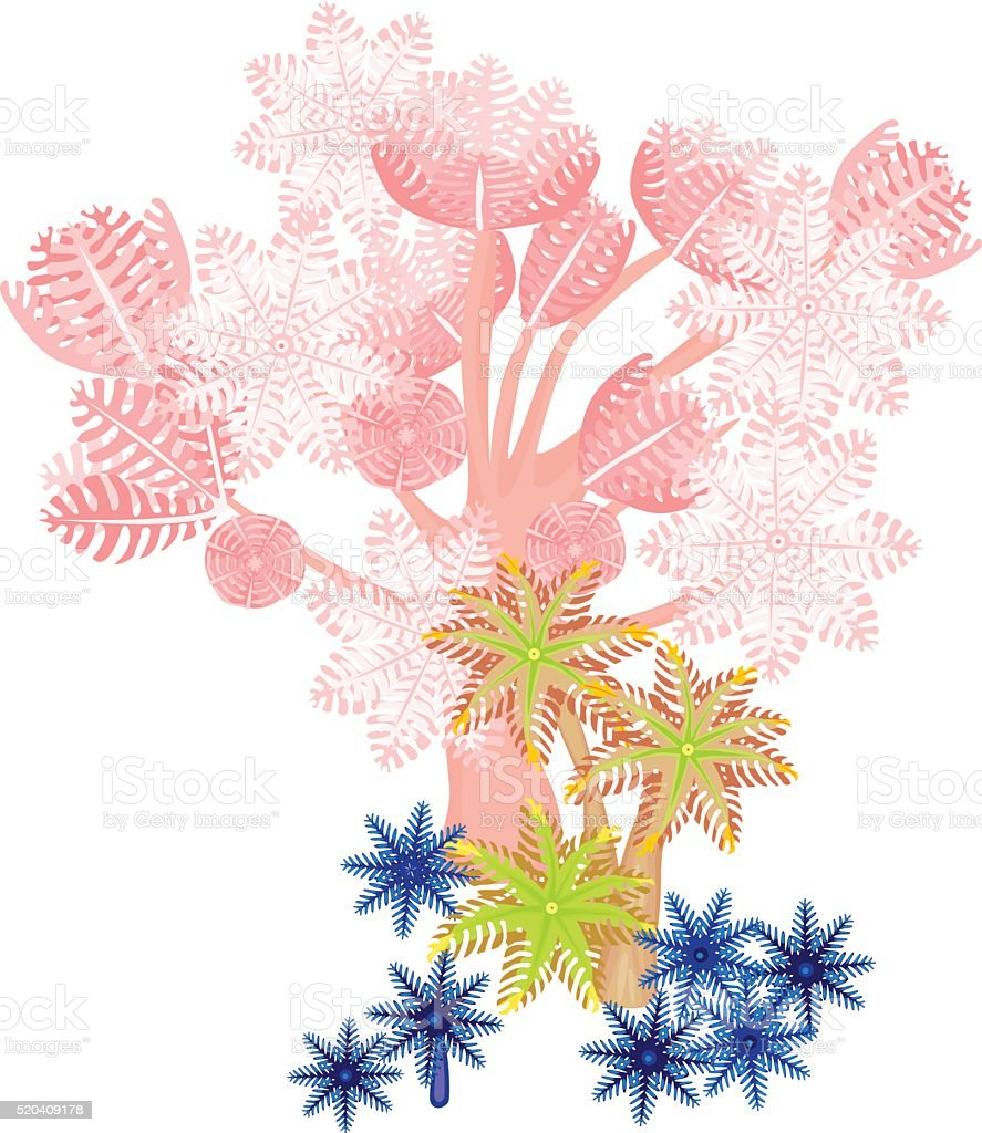 Clavularia, pumping xenia - soft coral vector art illustration