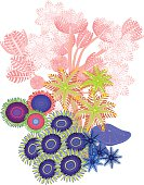 Clavularia, pumping xenia, zoanthus - soft coral