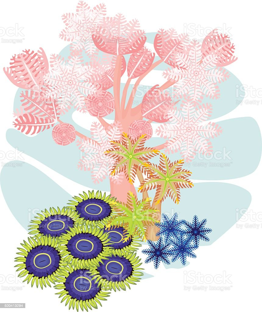 Clavularia, pumping xenia, zoanthus - soft coral vector art illustration