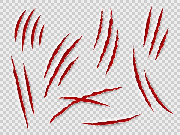 illustrazioni stock, clip art, cartoni animati e icone di tendenza di artigli graffi. tracce di artiglio animale, gatto o tigre, orso o leone attaccano i graffi delle unghie. thriller horror, set vettoriale mostro di halloween - thriller