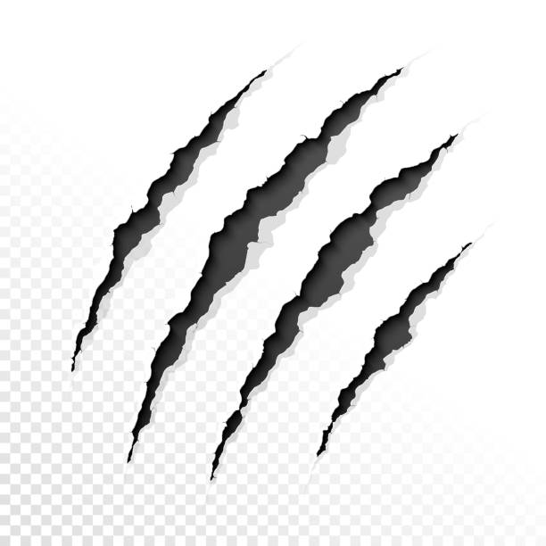 Claws scratches Claws scratches on transparent background. Vector illustration with transparent effect, eps10. werewolf stock illustrations
