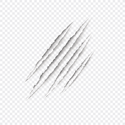 Claws scratches - vector isolated on transparent background.