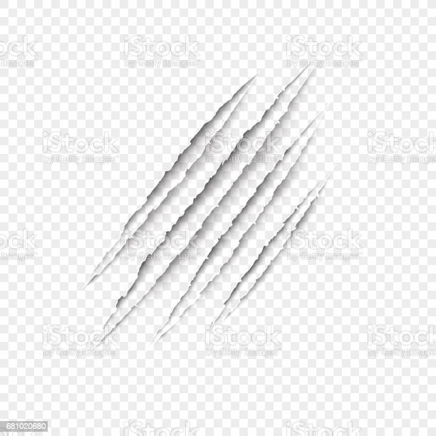 Claws scratches vector isolated on transparent background vector id681020680?b=1&k=6&m=681020680&s=612x612&h=0djay8e9jja 4qv lt9owe8g7mjj4r4f xjqpwxucyk=