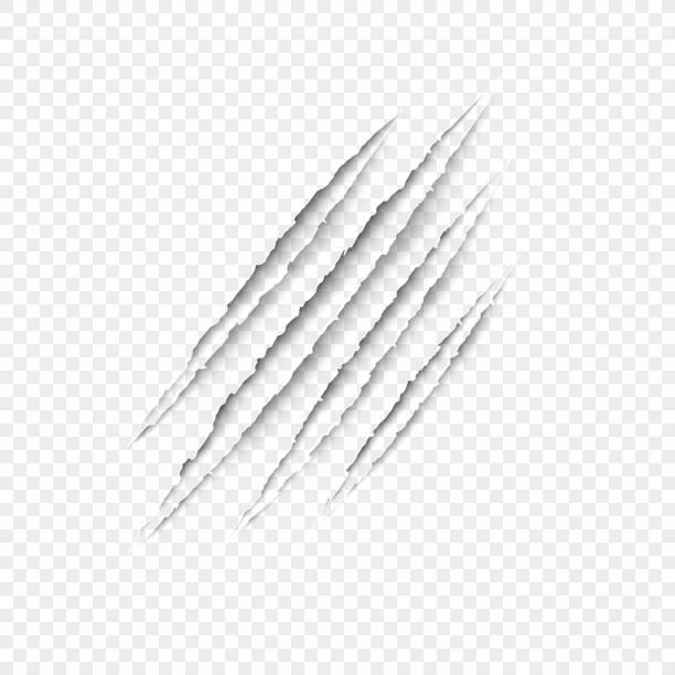 illustrazioni stock, clip art, cartoni animati e icone di tendenza di claws scratches - vector isolated on transparent background. - thriller