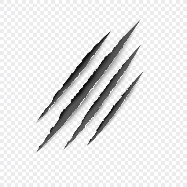 claws scratches. vector scratch set isolated on gray background. - tiger stock illustrations, clip art, cartoons, & icons