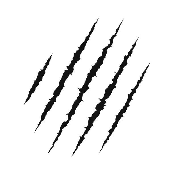 illustrazioni stock, clip art, cartoni animati e icone di tendenza di claws scratching animal. shredded paper. scratched surface. vector illustration - thriller