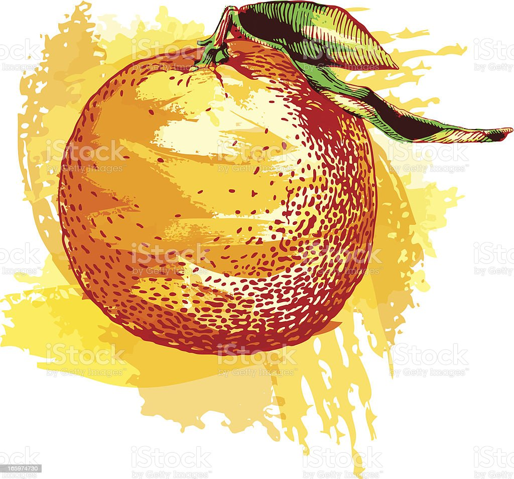 Clementine vector art illustration