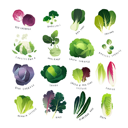 Clip art cabbage collection, various lettuce types