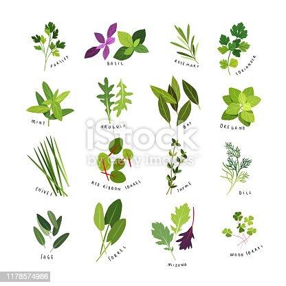 Clip art illustrations of herbs and spices such as parsley, basil, rosemary, coriander, mint, arugula, bay, oregano, chives, red ribbon sorrel, thyme, dill, sage, sorrel, mizuna and wood sorrel