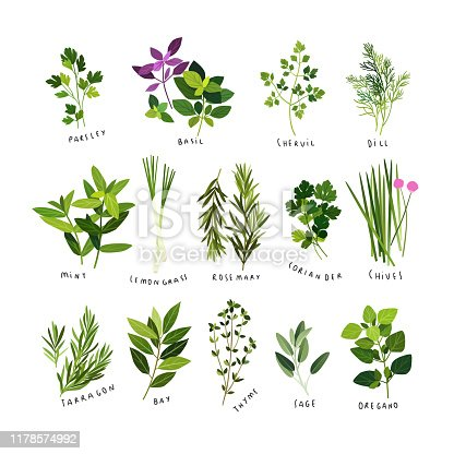 istock Clip art illustrations of culinary herbs and spices 1178574992