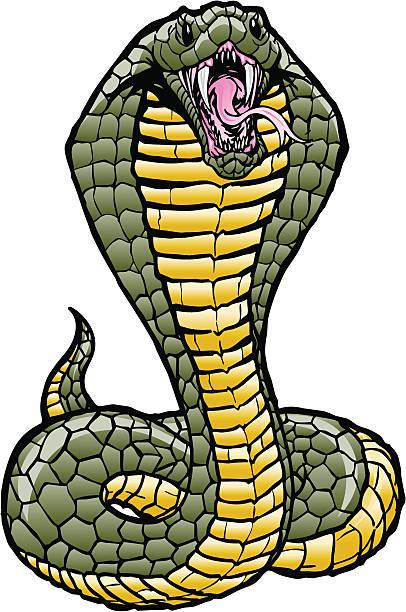 Royalty Free Cobra Clip Art, Vector Images & Illustrations ...