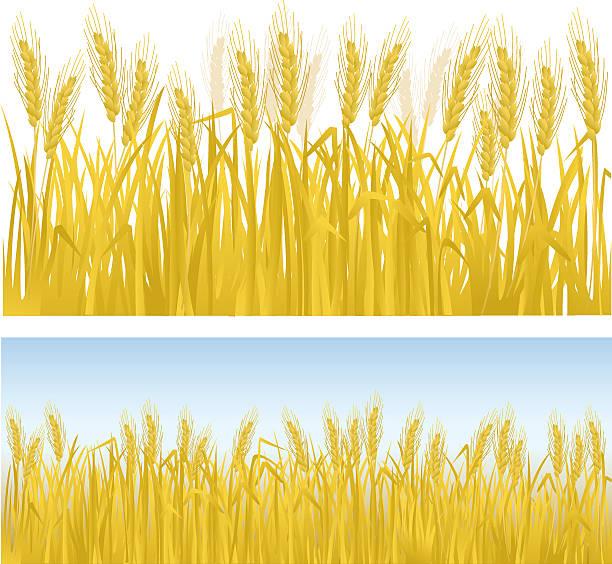 ilustraciones, imágenes clip art, dibujos animados e iconos de stock de los cultivos - straw field