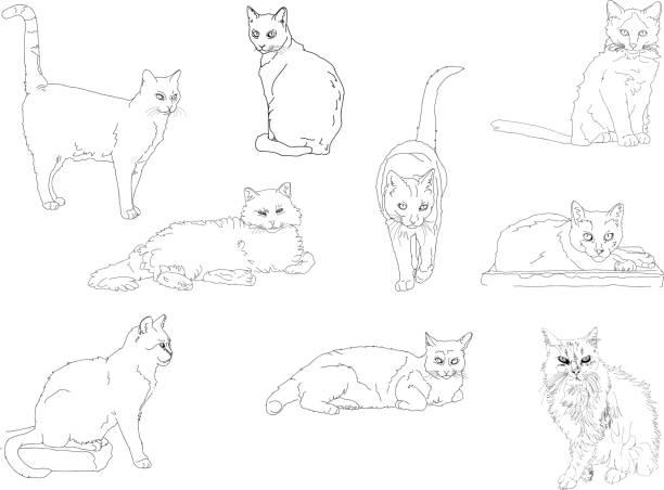 clipart. wilde, streunende katzen in verschiedenen posen. - schrottplatzkunst stock-grafiken, -clipart, -cartoons und -symbole