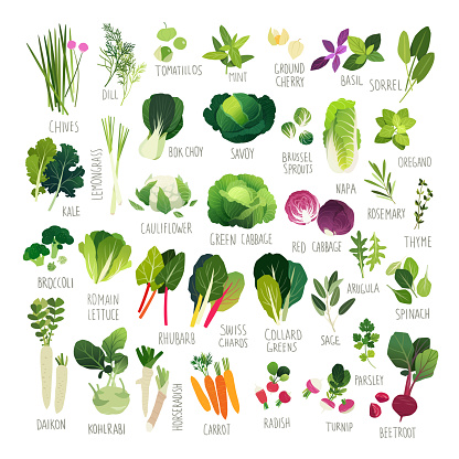 Clipart collection of vegetables and common culinary herbs