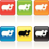 Cloned sheep icon. See more icons in this series.