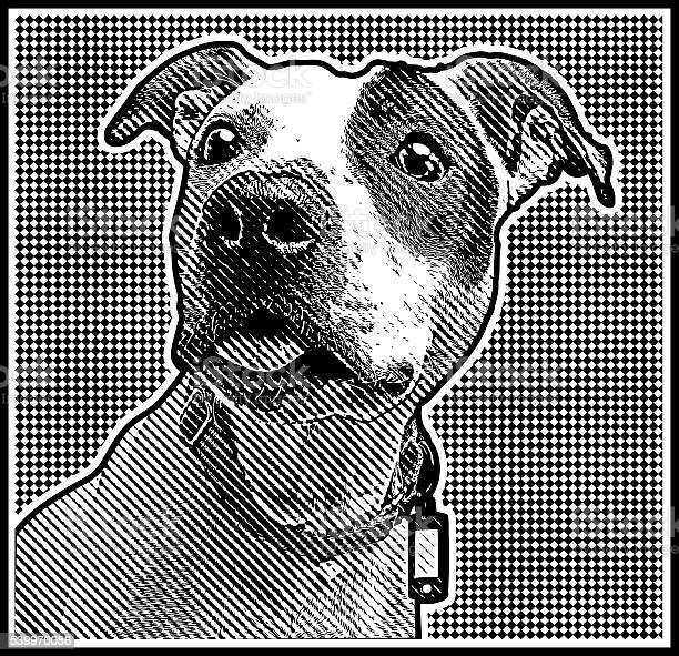 Close up engraving portrait of a pit bull vector id539970086?b=1&k=6&m=539970086&s=612x612&h=yqwdqhhyaemccf1yefeesbsrz2q7hkn6t1jqfqknggy=