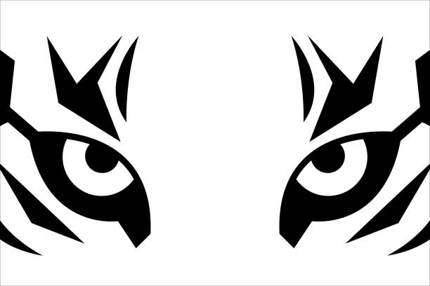 Close up eyes of tiger Close up eyes of tiger. Black and white t-shirt print with tiger face. Vector sticker animal eye stock illustrations