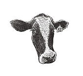 Stipple illustration Close up of a cute cow face
