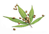 Close up of cannabis leaf and seeds