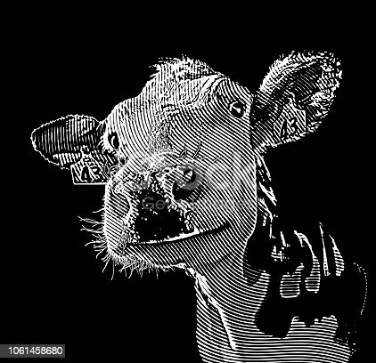 Stipple illustration Close up of happy smiling cow
