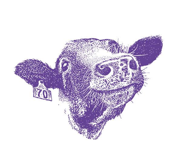 행복 하 게 웃는 암소의 클로즈업 - 소 stock illustrations