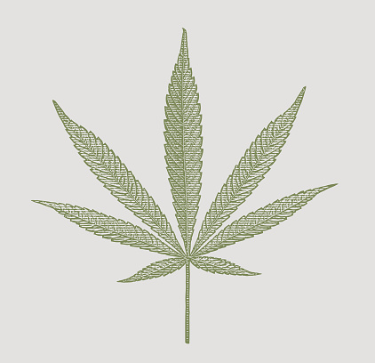 Close up of hemp leaf cut out on white background