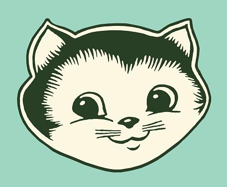 Close up of Kitten
