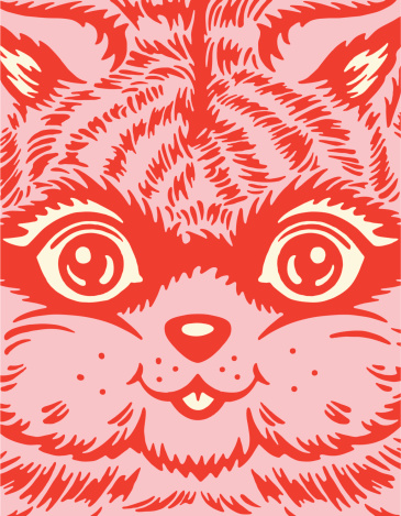Closeup of a Cat