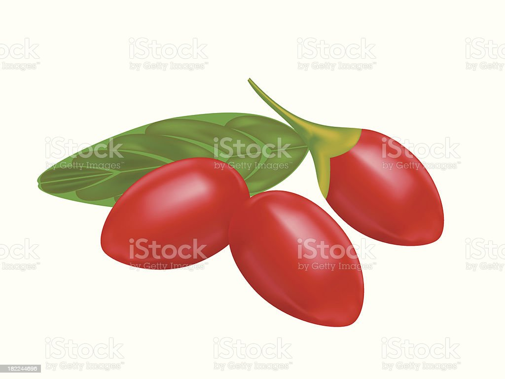 Close-up three red goji berries and a leaf royalty-free stock vector art