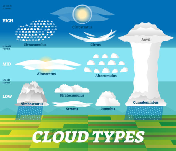Cloud types vector illustration. Labeled air scheme with altitude division. Cloud types vector illustration. Labeled air scheme with altitude division. Nature weather meteorological and geographical info graphic with stratus, cumulus, anvil and cirrus classification examples. altocumulus stock illustrations