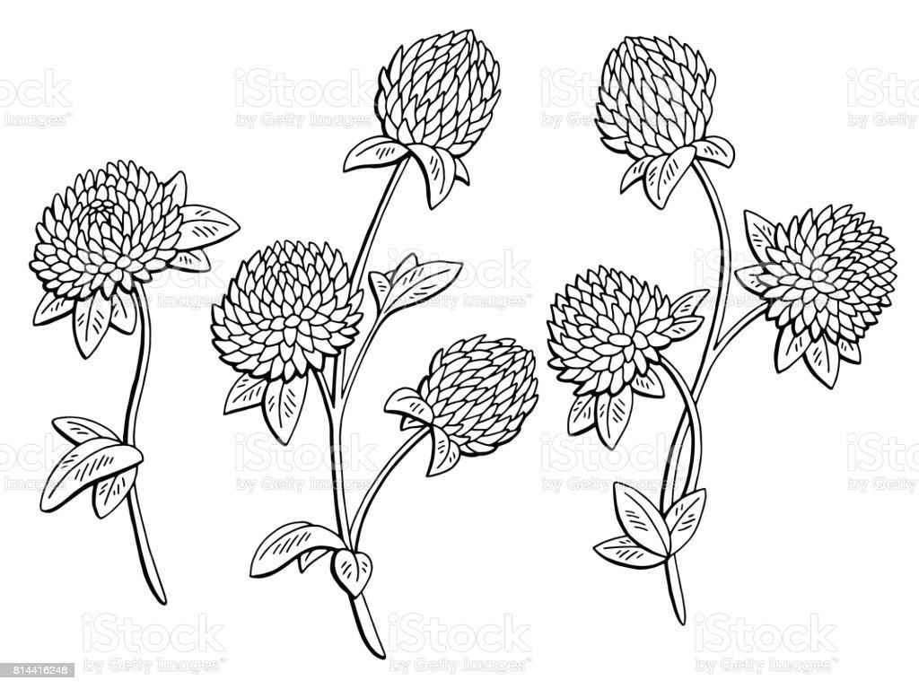 Vetores De Trevo Flor Grafico Preto Branco Isolado Desenho