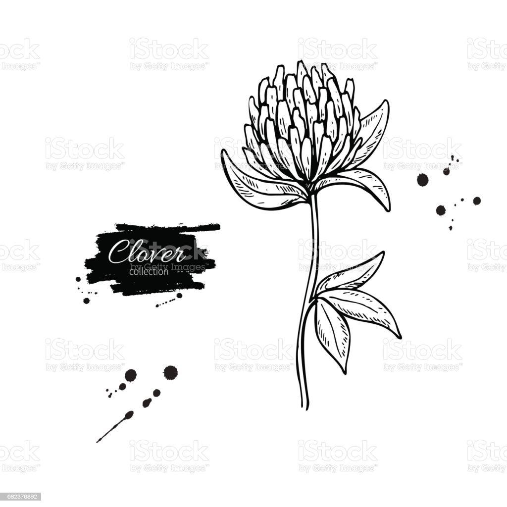 Clover blomma vektor ritning set. Isolerade vilda växter och blad. Växtbaserade graverade stil illustration. royaltyfri clover blomma vektor ritning set isolerade vilda växter och blad växtbaserade graverade stil illustration-vektorgrafik och fler bilder på affisch