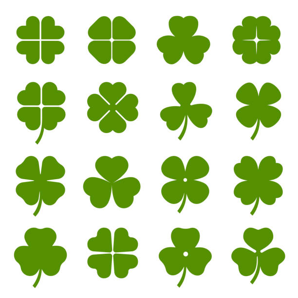 Clover leaves with four and three petals green icons set. Shamrock plant, grass. Clover leaves with four and three petals green icons set. Shamrock plant, grass. Saint Patrick day, Ireland symbol. Botanical, floral decoration elements. Vector collection isolated on white. shamrock stock illustrations