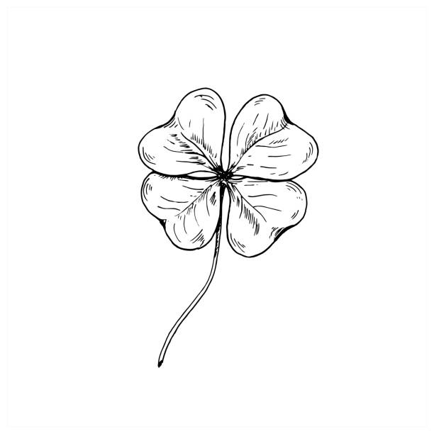 Clover sketch. Hand drawn four leaf clover. Vector illustration, isolated on white. Clover sketch. Hand drawn four leaf clover. Vector illustration, isolated on white. shamrock stock illustrations