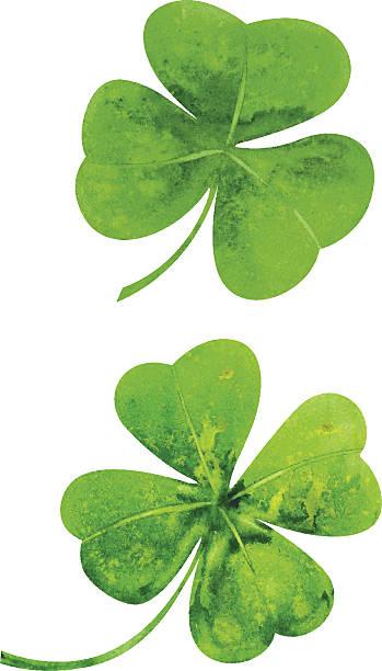 Clover Clover leaves. Watercolor vector illustration. shamrock stock illustrations