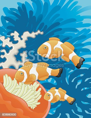 istock Clown-Fish Familly / Famille de poissons-clown 828980500