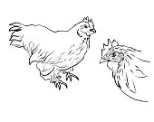 Hen and rooster head