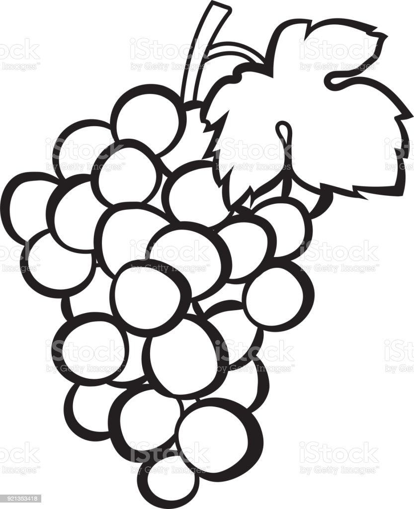 Cluster Of Grapes Hand Drawn Sketch Icon Stock Vector Art & More ...