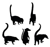Silhouette vector illustration of Coati from the raccoon family