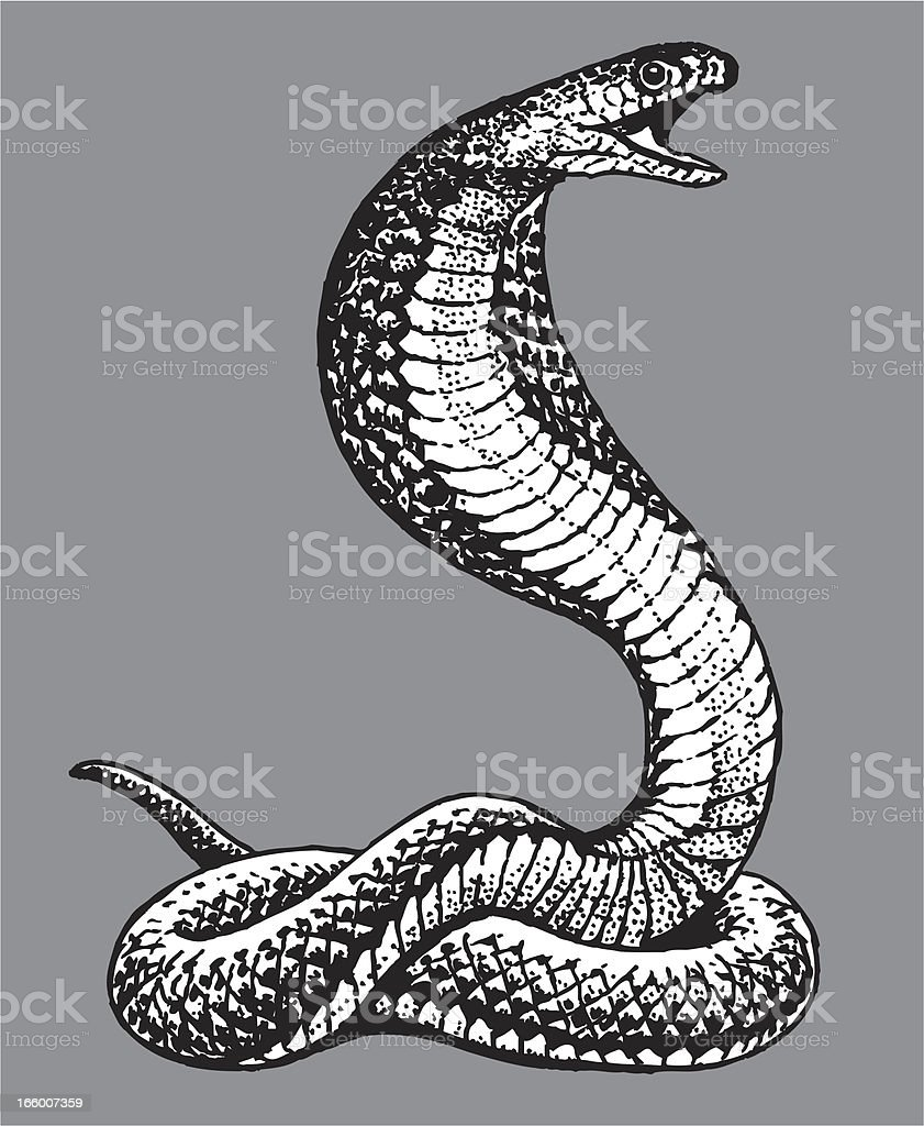 Cobra Snake vector art illustration
