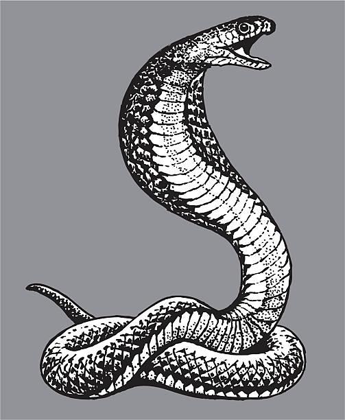 コブラスネーク - ヘビ点のイラスト素材/クリップアート素材/マンガ素材/アイコン素材