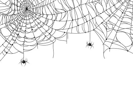 Cobweb background. Scary spider web with spooky spider, creepy arthropod halloween decor, net texture tattoo design vector template