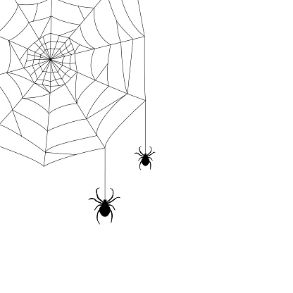 cobwebs in the corner and two spiders