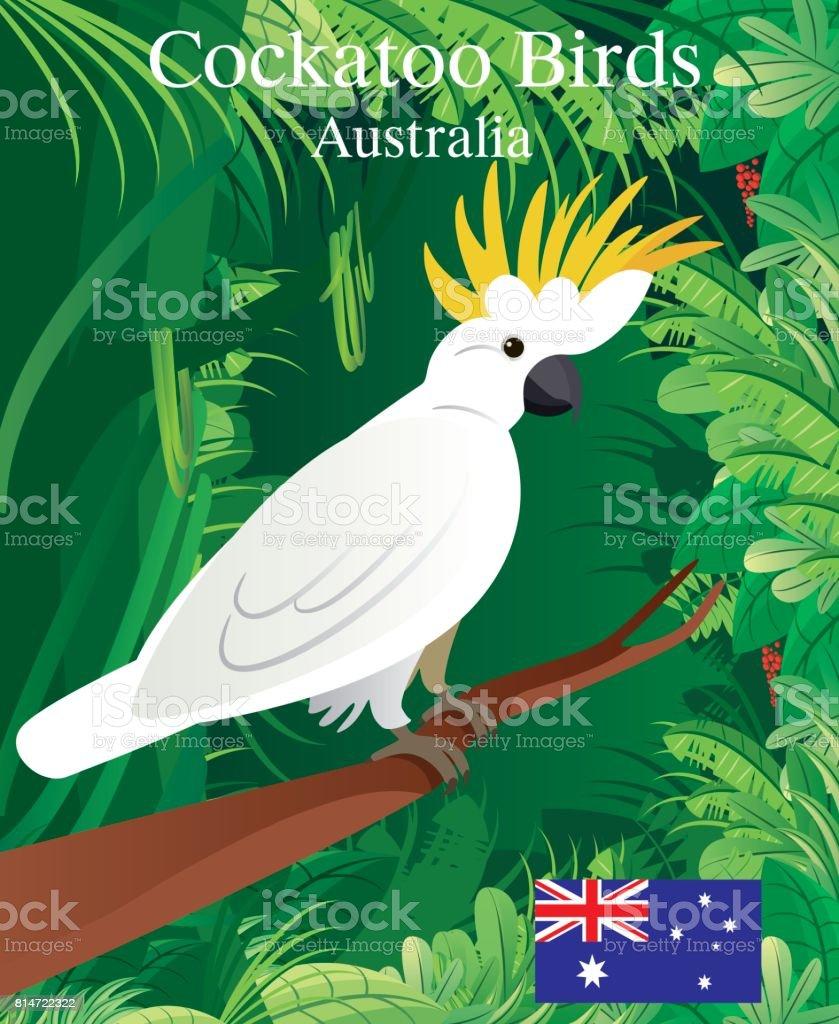 Cockatoo Birds vector art illustration