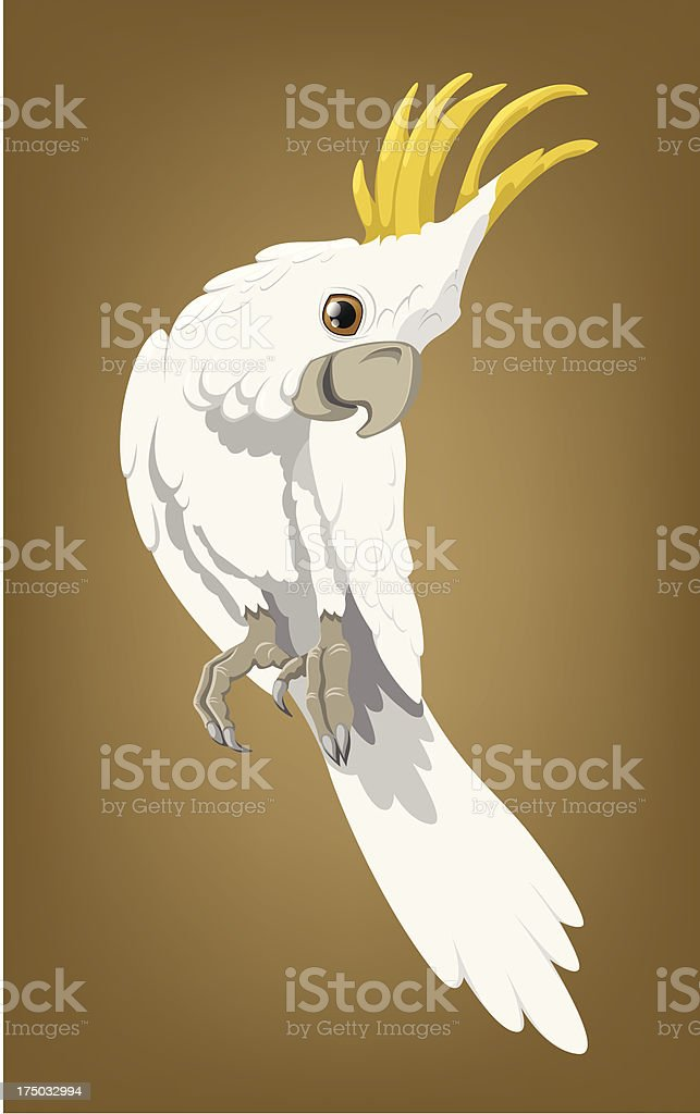Cockatoo vector art illustration