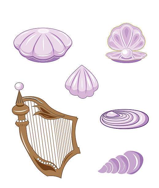 Best Pearl Oyster Illustrations, Royalty-Free Vector ...