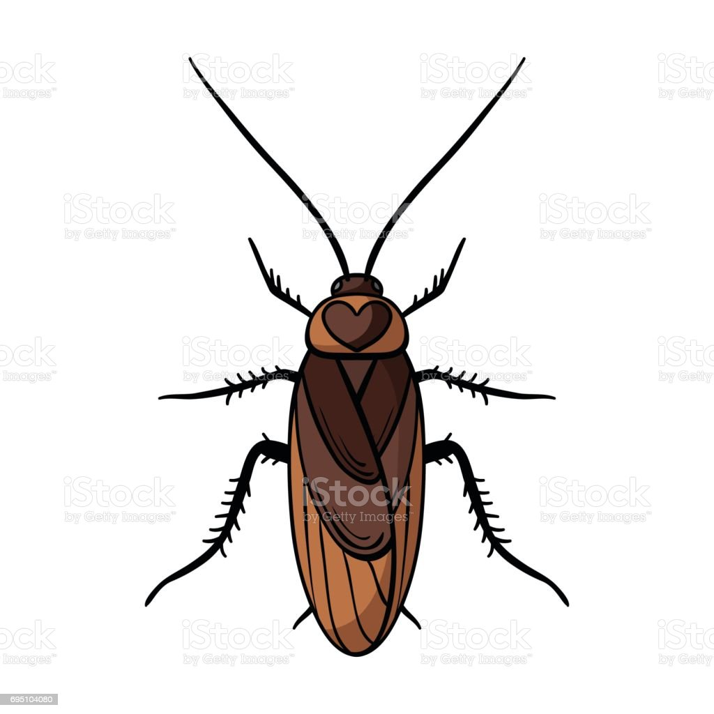 royalty free cockroach clip art vector images illustrations istock rh istockphoto com hissing cockroach clipart cockroach clipart png
